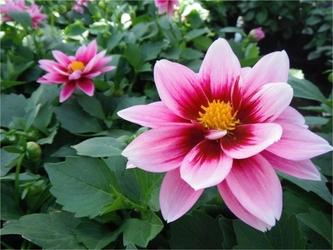 Fototapeta kwiat 70