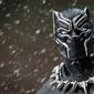 Black panther t-challa - plakat wymiar do wyboru: 70x50 cm