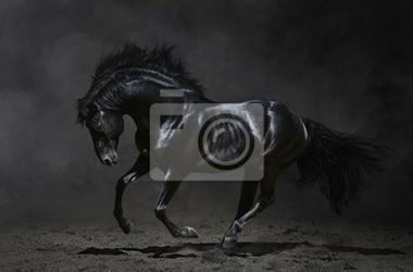 Obraz galopujący czarnego konia na ciemnym tle