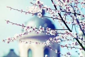 Fototapeta na ścianę kwitnące drzewo na tle kościoła fp 678