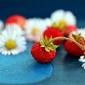 Fototapeta maliny i rumianek fp 887