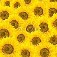 Obraz na płótnie canvas dwuczęściowy dyptyk słoneczniki