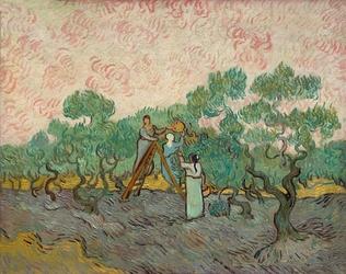 Women picking olives, vincent van gogh - plakat wymiar do wyboru: 40x30 cm