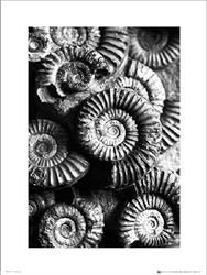 Fossils Black And White - plakat premium