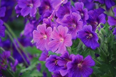 Fototapeta kwiat 351