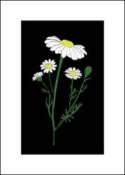 Rumianek nocą - plakat wymiar do wyboru: 20x30 cm