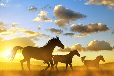 Fototapeta konie 1723