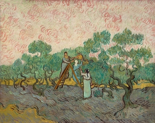 Women picking olives, vincent van gogh - plakat wymiar do wyboru: 29,7x21 cm
