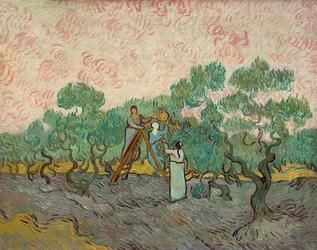 Women picking olives, vincent van gogh - plakat wymiar do wyboru: 29,7x21 cm