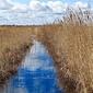 Fototapeta błękitna woda wśród wysuszonych słońcem trzcin fp 1516