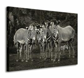 Zebras - Obraz na płótnie