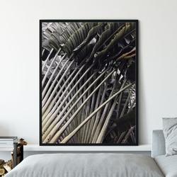 Plakat w ramie - gold of tropics , wymiary - 50cm x 70cm, ramka - czarna