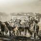 Fototapeta migrazione gnu w tle nella sabbia della savana