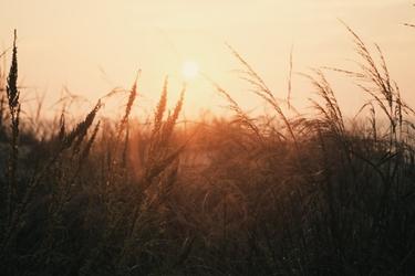 Fototapeta na ścianę splątane trawy podczas zachodu słońca fp 5693
