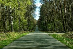 Fototapeta na ścianę droga w soczyście zielonym lesie fp 5728
