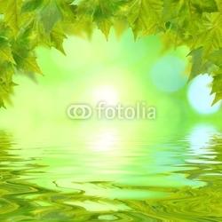 Board z aluminiowym obramowaniem zielone liście na wiosnę