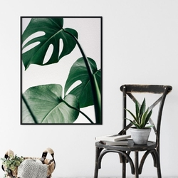 Plakat w ramie - design monstera , wymiary - 50cm x 70cm, ramka - biała
