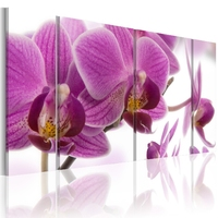 Obraz - marvelous orchid
