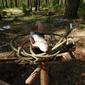 Kurs survivalu szkoła przetrwania - warszawa - bushcraft amp; diving