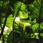 W cieniu liści - plakat wymiar do wyboru: 42x29,7 cm