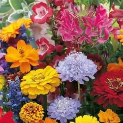 Kwiaty odstraszające zające – mix nasion – kiepenkerl