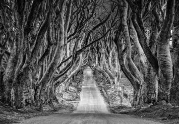 Droga przez las - fototapeta