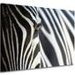 Zebra - obraz na płótnie