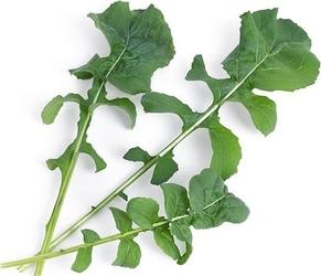 Wkład nasienny lingot warzywa liściowe rukola