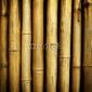 Obraz na płótnie canvas dwuczęściowy dyptyk bambusowy tło