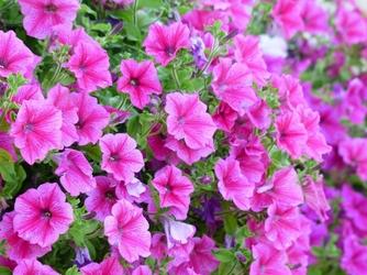 Fototapeta kwiat 297