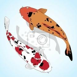 Plakat carp. koi fish vector karty okolicznościowe