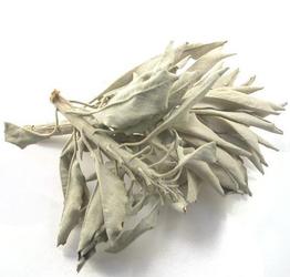 Biała szałwia susz 500 g