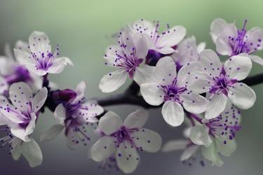 Fototapeta kwiat 348