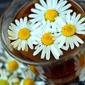 Fototapeta kwiaty rumianku w szklance fp 789