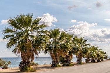Fototapeta palmy przy drodze 733