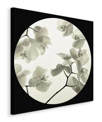 Orchid i - obraz na płótnie