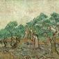 The olive orchard, vincent van gogh - plakat wymiar do wyboru: 80x60 cm