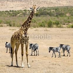 Board z aluminiowym obramowaniem żyrafa masajska
