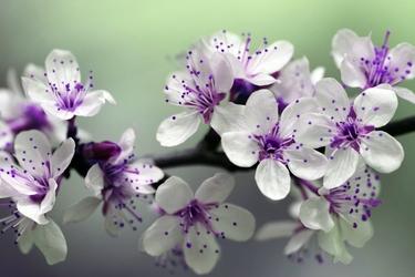 Fototapeta zjawiskowe kwiaty fp 732