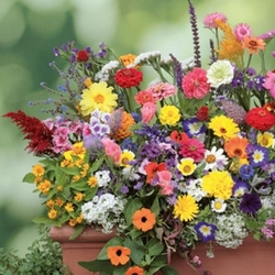 Kwiaty na balkon – mix nasion na taśmie – kiepenkerl