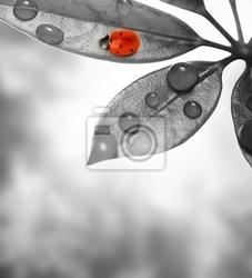 Fototapeta biedronka posiedzenia na zielonym liściem.