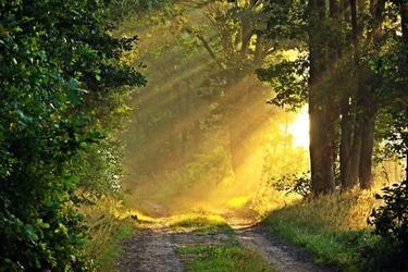 Fototapeta na ścianę słońce rozpraszające mgłę fp 3390