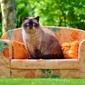 Fototapeta na ścianę kot siedzący na sofie fp 2618