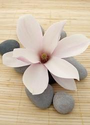 Kwiat, spa - fototapeta