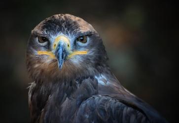 Fototapeta ptak 469