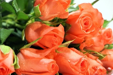 Fototapeta bukietowe róże fp 700