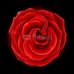 Fotoboard na płycie piękna czerwona róża, symbol miłości i namiętności