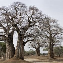 Obraz na płótnie canvas dwuczęściowy dyptyk malowniczy widok dużych drzew