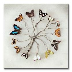 Butterfly harmony - obraz na płótnie