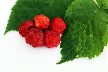 Fototapeta soczyste maliny z zielonym liściem fp 862